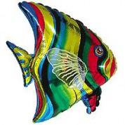 Тропическая рыбка 65 см.